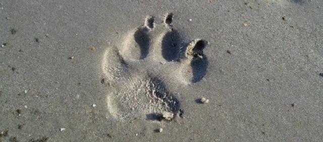 Impronta sulla sabbia