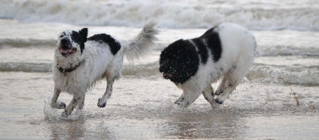 Spiaggia per cani - Campeggio con animali ammessi