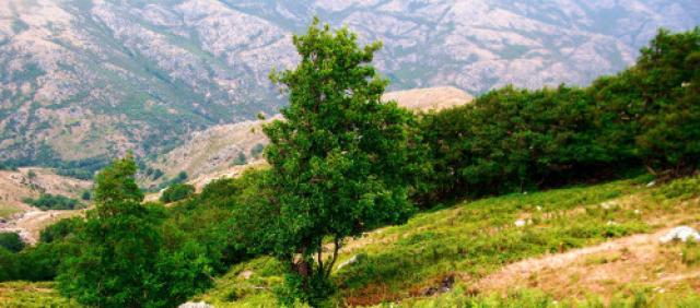 Parco nazionale del Gennargentu - Villanova Strisaili