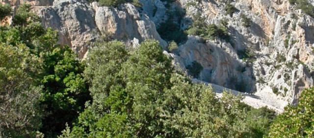Canyon su Gorropu - vista