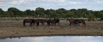 IMG Vacanze a cavallo in Sardegna - Maneggi ed escursioni