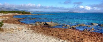IMG San Teodoro  - Case Vacanza Sardegna 2017