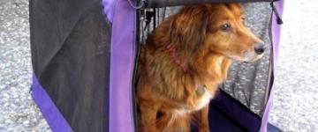 IMG In traghetto per la Sardegna con cani e animali