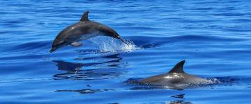 IMG Avvistamento delfini in Sardegna - Escursioni e consigli