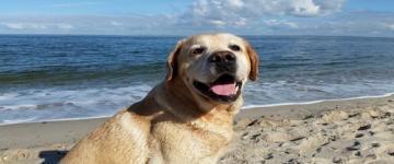IMG Le migliori spiagge per i cani 2018 in Sardegna